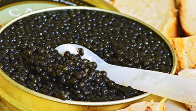 "A just open tin of black caviar with slices of bread and a spoon of mother-of-pearl to scoop up the precious eggs ""Caviar et Prestige"" Saint Sulpice et Cameyrac Entre-deux-Mers Bordeaux Gironde Aquitaine France - at Caviar et Prestige"
